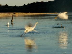 130127 Baja Birds 077 -V2 - Version 4