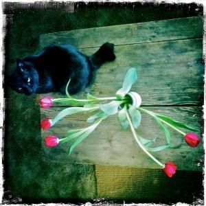 1. 120705  Sitka Bukowski tulips+_3870S